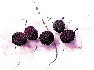 blackberries_o