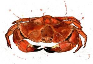 crab_o