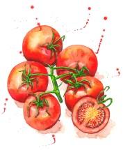 tomatos_o
